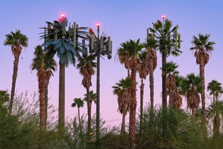 """Annette LeMay Burke, """"Airport Approach, Palm Springs, CA,"""" from <em>Fauxliage</em>"""